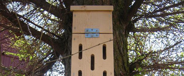 En sommerfugl i kassen – Byg selv