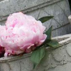 DIY støb beton ting til haven, beton med guldkant