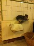 En hylde med varme til kattene