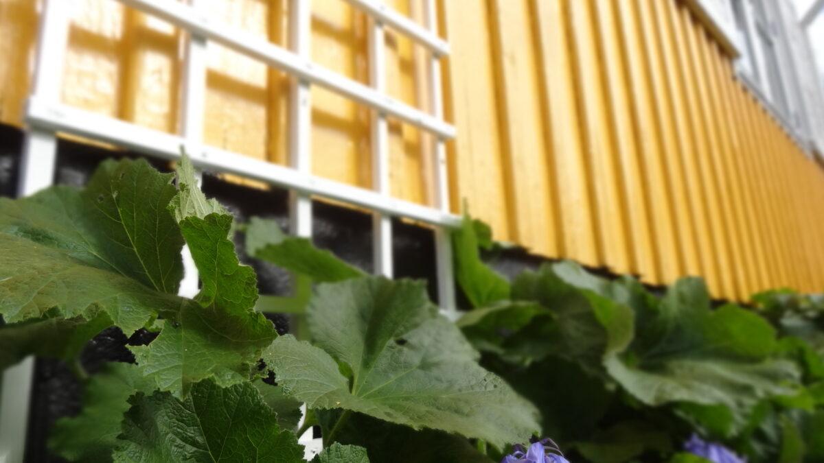 Byg et hjemmelavet espalie til havens blomster