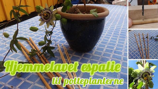 Hjemmelavet espalie til potteplanterne