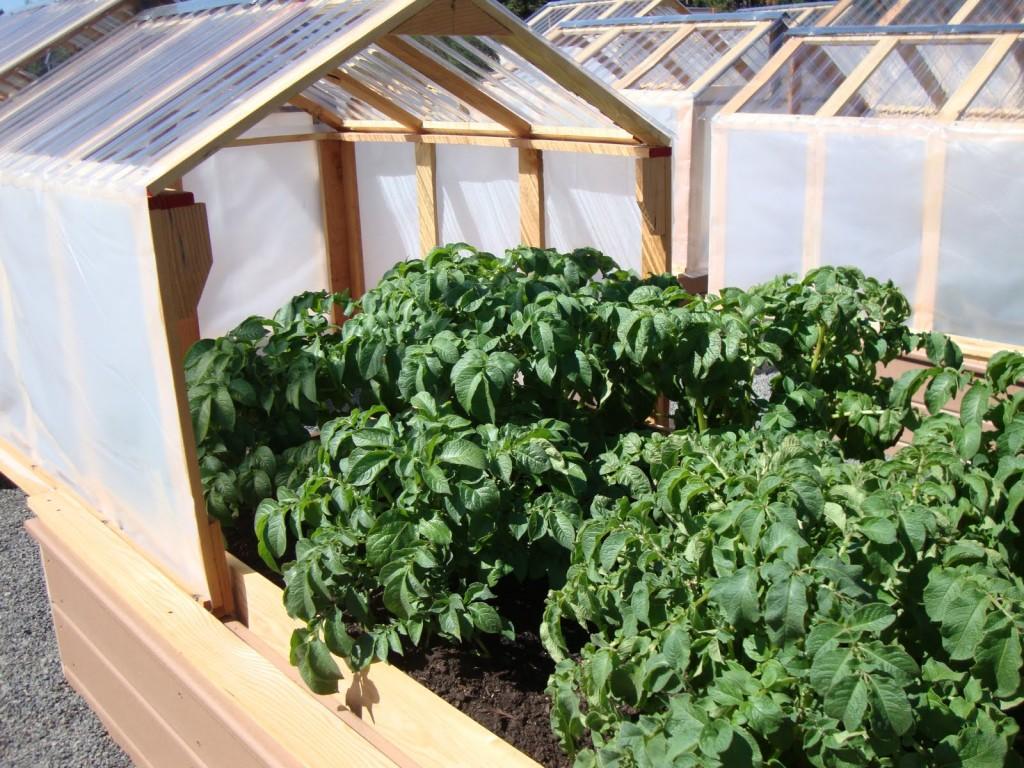 mini greenhouses 5
